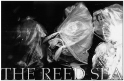 The Reed Sea – No Help