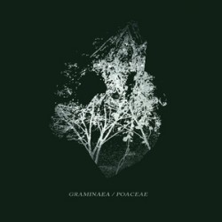 Sequences & Isolated Existence – Graminaea / Poaceae