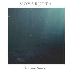 Records: Novarupta announce second album