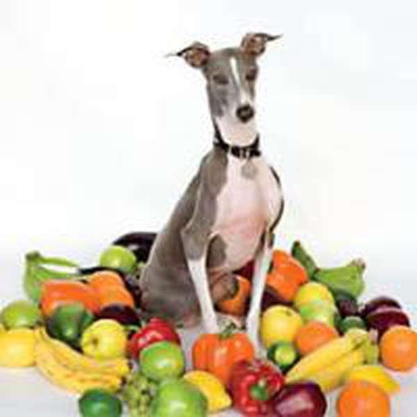 Shellac – Excellent Italian Greyhound cover artwork