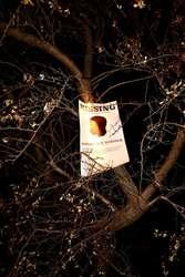Missing or Dead Dark Path